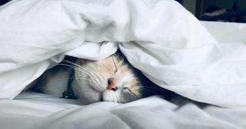 Razones y beneficios de dormir bien