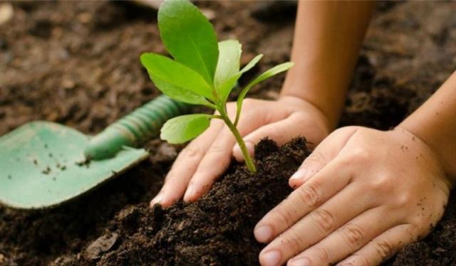 Plantar árboles: consejos para sembrar el tuyo por primera vez