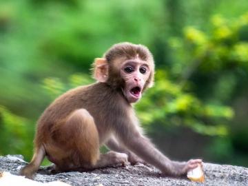 Por qué se celebra el Día Mundial del Mono