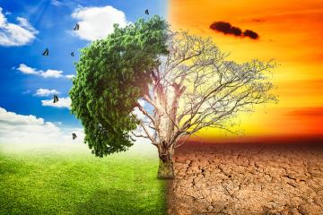 Razones por las que la conservación del medio ambiente importa