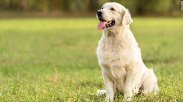 Cosas que no debería hacer tu perro según los veterinarios