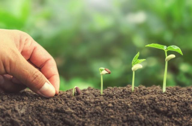 Calendario de siembra y cosecha 2021 en México