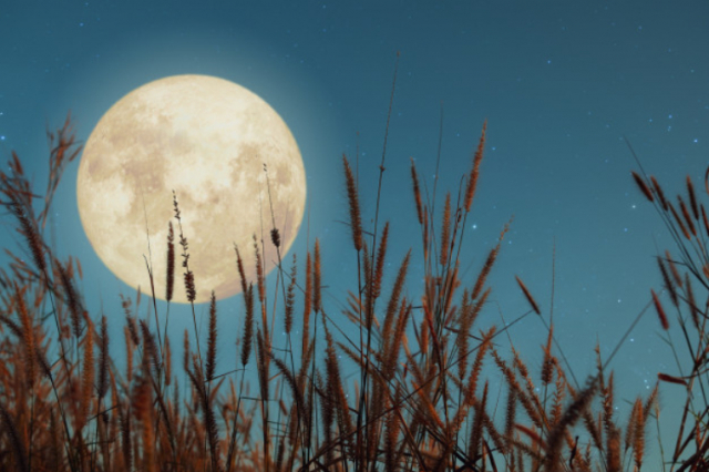 Calendario lunar para siembra de huerto ecológico