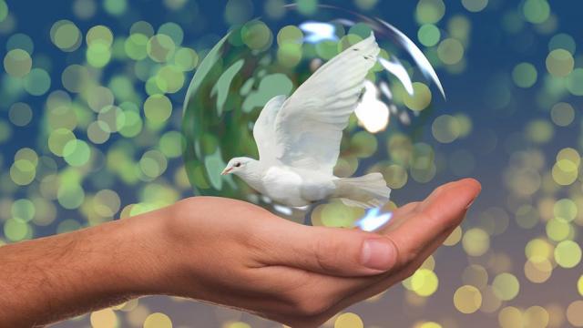 Día Internacional de la Paz: Origen y razones de esta celebración