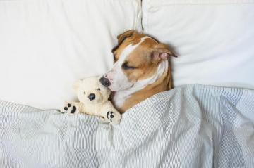 Pasos para dormir bien y mejor