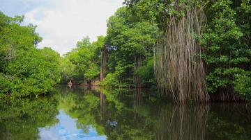 Día Nacional de la Conservación: Datos y cifras