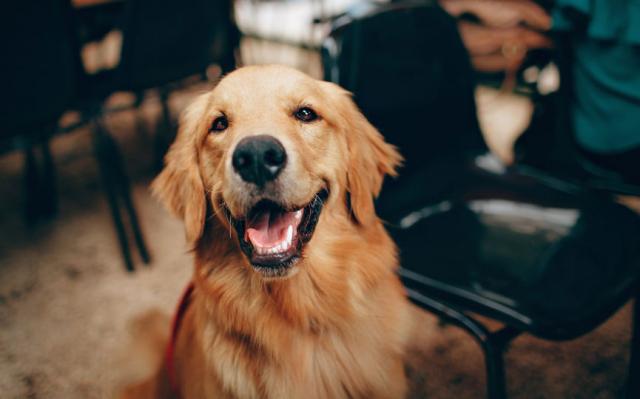 Descubre qué raza de perro hace match de acuerdo a cada signo zodiacal