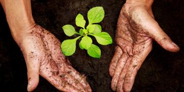 9 Motivos o razones que te convencerán de plantar un árbol
