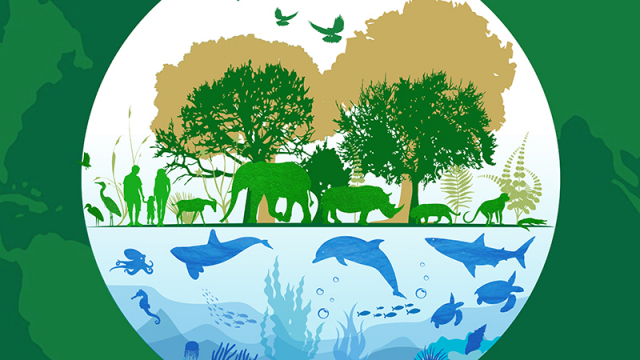 Origen y motivo de celebrar el Día Mundial de la Naturaleza el 3 de marzo