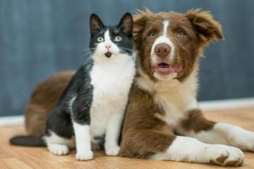 Conoce aquí por qué se celebra el Día del Animal en Argentina el 29 de abril