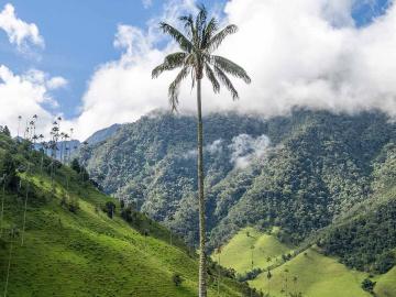 Razones por las que se celebra el Día del Árbol en Colombia el 29 de abril