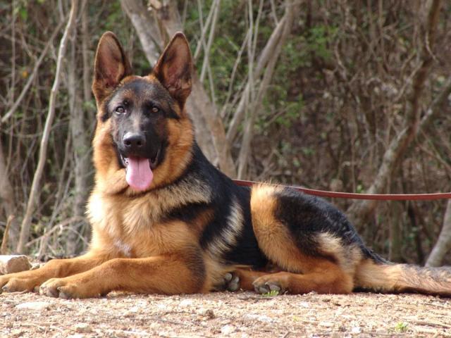 Por qué se celebra el Día Nacional del Perro en Argentina