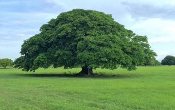 Por qué se celebra el Día del Árbol en Costa Rica